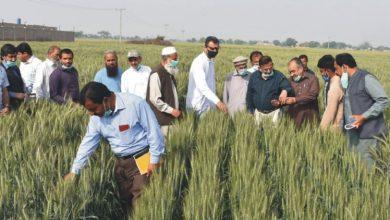 زرعی ماہرین