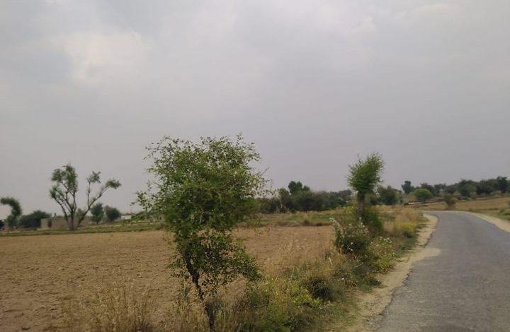 weather rahimyarkhan